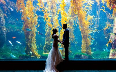 Birch Aquarium Wedding | Kyle & Lorin